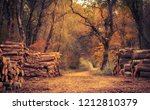pile of woods in autumn forest | Shutterstock . vector #1212810379