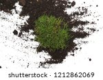 Green Moss With Dirt  Soil...