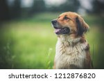 Stock photo beautiful dog in green grass 1212876820