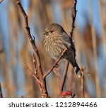 small songbird resting on a... | Shutterstock . vector #1212894466