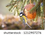 Cute Great Tit Bird Eating Bir...