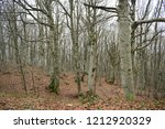 forest of trees with leaves on... | Shutterstock . vector #1212920329