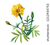 yellow marigolds isolated on a...   Shutterstock . vector #1212934753