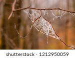 The Spider Nets And Plants Wer...