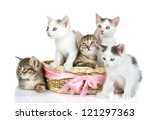 Stock photo three small kittens in a basket isolated on white background 121297363
