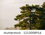 evergreen tree with beutiful... | Shutterstock . vector #1213008916