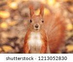 Autumn  Amusing Squirrel  Hell...