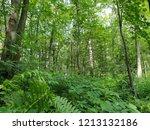 pure green canada | Shutterstock . vector #1213132186