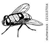 monochrome vector of common...   Shutterstock .eps vector #1213137016