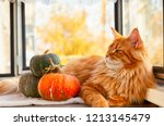 Ginger Maine Coon Cat And...