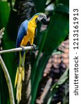 Blue Yellow Macaw Parrot...