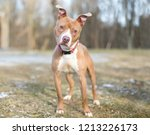 a red and white pit bull...   Shutterstock . vector #1213226173