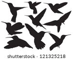 vector hummingbird of silhouette | Shutterstock .eps vector #121325218