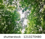 forest trees. nature green wood ... | Shutterstock . vector #1213270480