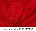 Macro Of Autumn Grape Leaf...