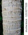Small photo of Coconut tree tunk