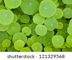 green leaves background   the... | Shutterstock . vector #121329568