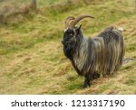 wild goat in the highlands of... | Shutterstock . vector #1213317190
