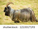 wild  goat in the highlands of... | Shutterstock . vector #1213317193
