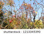 small red apples and blue sky.... | Shutterstock . vector #1213345390