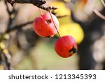 small red apples and blue sky.... | Shutterstock . vector #1213345393