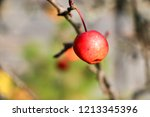 small red apples and blue sky.... | Shutterstock . vector #1213345396