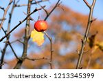 small red apples and blue sky.... | Shutterstock . vector #1213345399