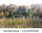 meadow with tall dryed out... | Shutterstock . vector #1213345420