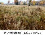 meadow with tall dryed out... | Shutterstock . vector #1213345423