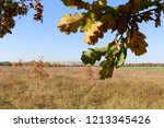 meadow with tall dryed out... | Shutterstock . vector #1213345426