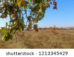meadow with tall dryed out... | Shutterstock . vector #1213345429