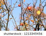 small red apples and blue sky.... | Shutterstock . vector #1213345456