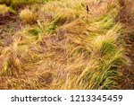 meadow with tall dryed out... | Shutterstock . vector #1213345459