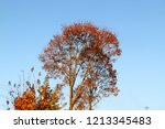 yellow leaves against a blue... | Shutterstock . vector #1213345483