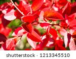 autumn colorful barberry red... | Shutterstock . vector #1213345510