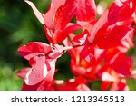 autumn colorful barberry red... | Shutterstock . vector #1213345513