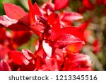 autumn colorful barberry red... | Shutterstock . vector #1213345516