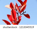 autumn colorful barberry red... | Shutterstock . vector #1213345519