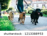 Stock photo dog walker enjoying with dogs while walking outdoors 1213388953