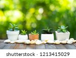 plant pot on old wood over... | Shutterstock . vector #1213415029