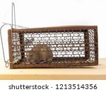 mouse caught in a mousetrap. ... | Shutterstock . vector #1213514356