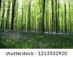 forest with bluebells | Shutterstock . vector #1213532920