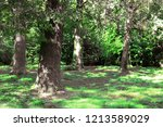 old oaks in autumn park ... | Shutterstock . vector #1213589029