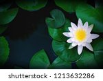 Beautiful White Lotus Flower...