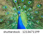 colorful peacock with beautyful ... | Shutterstock . vector #1213671199