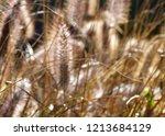 wild grass abstract   Shutterstock . vector #1213684129