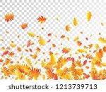 oak  maple  wild ash rowan... | Shutterstock .eps vector #1213739713
