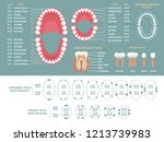 tooth anatomy chart.... | Shutterstock .eps vector #1213739983