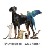 Stock photo group of pets 121378864