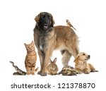 Stock photo group of pets 121378870
